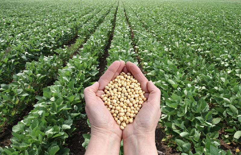 Photo of Это важно знать! Сведения для участников зернового рынка