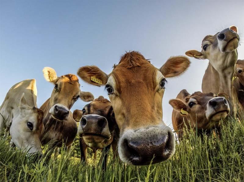 Photo of Минсельхоз Германии хочет ввести налог на «благополучие животных»
