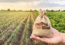 Начинающие сельхозпроизводители будут обеспечены господдержкой в форме льготного кредитования