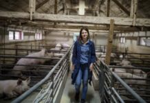 Минсельхоз внес изменения в правила определения зоосанитарного статуса свиноводческих хозяйств