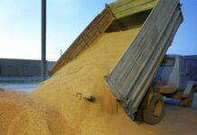 «Серые» схемы оборота зерна будут ликвидированы