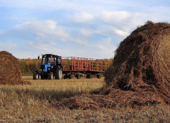 Создание кооперативов в сельском хозяйстве будет проходить по упрощенной схеме