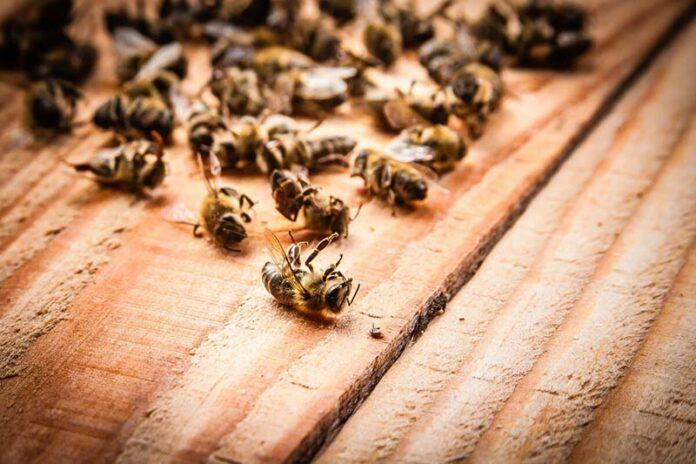 Травля пчел продолжается