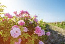 ВКрымупоявится уникальный селекционно-семеноводческий центр