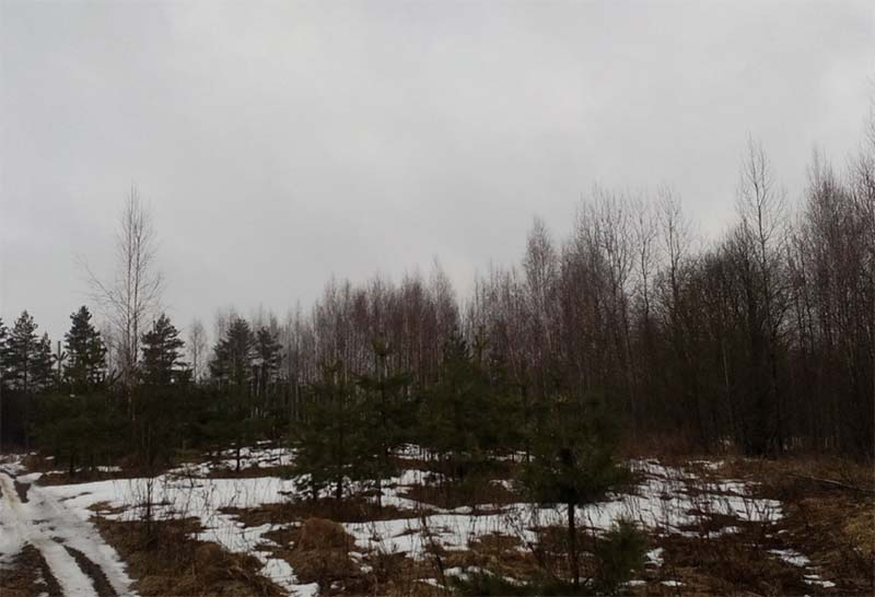 В Тверской области 160 гектаров сельхозугодий зарастают сорной растительностью