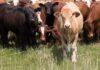 Владимир Путин продлил освобождение племенного животноводства от НДС