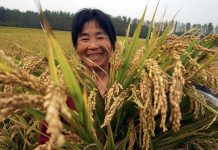 Главные достижения КНР в сфере сельского хозяйства