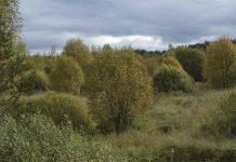 Лесной фонд Тверской области увеличился более чем на 580 га