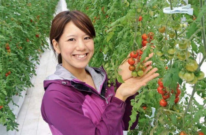 Новая технология выращивания томатов с помощью гидрогеля