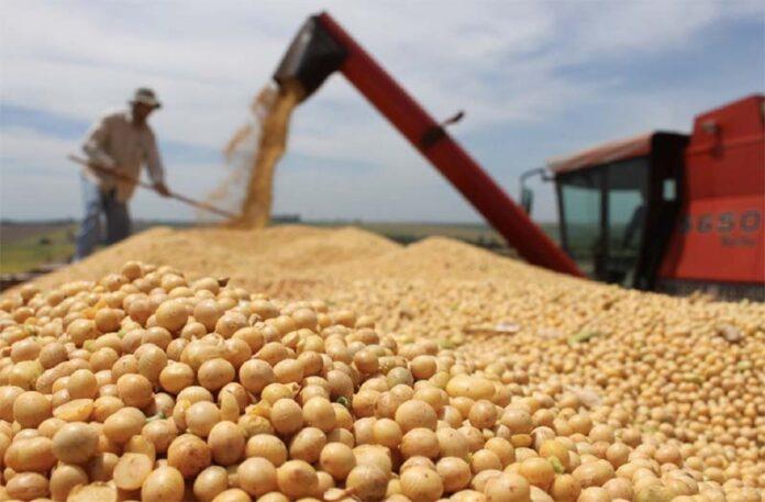 Отечественные производители предлагают ввести 20% пошлину на экспорт сои