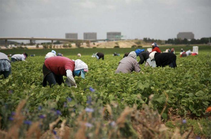 Российские фермеры и садоводы просят власти упростить ввоз иностранной рабочей силы для выращивания урожая