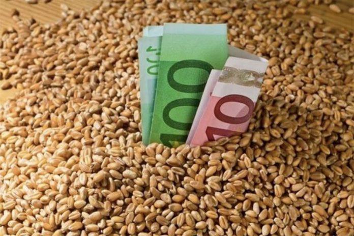 Российские производители зерна могут потерять 10–15% выручки из-за введения пошлин и квот на экспорт