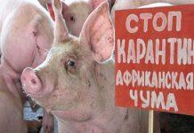 В еще двух селах Волгоградской области зафиксирована вспышка АЧС