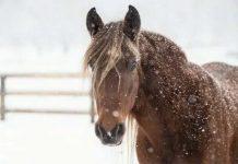 В Казахстане жертвами обледенения и фермерской халатности стали почти 200 лошадей