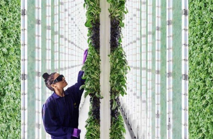 В Сан-Франциско открылась вертикальная фермаPlenty