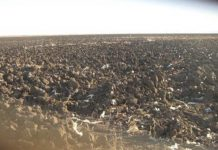В Саратовской областивыявлено захламление трех земельных участков сельскохозяйственного назначения
