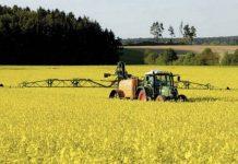 Введение пошлин на экспорт рапса существенно сократит посевы