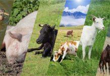 Минсельхоз утвердил новые ветеринарные правила содержания скота