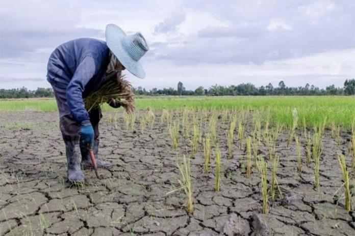 Мнение эксперта — сельское хозяйство стран Азии и Африки обречено