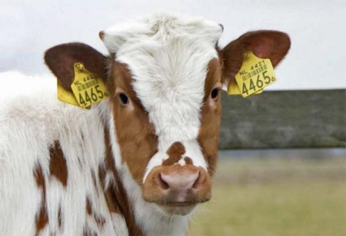 Обязательная маркировка сельскохозяйственных животных в России начнется не раньше 2022 года