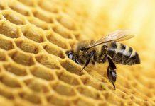 Пчеловодам на заметку новые правила разведения пчел