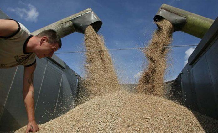 Россия и Украина: как два соперника уживутся на мировом рынке зерна?