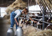 Россия по-прежнему не обеспечивает себя молоком