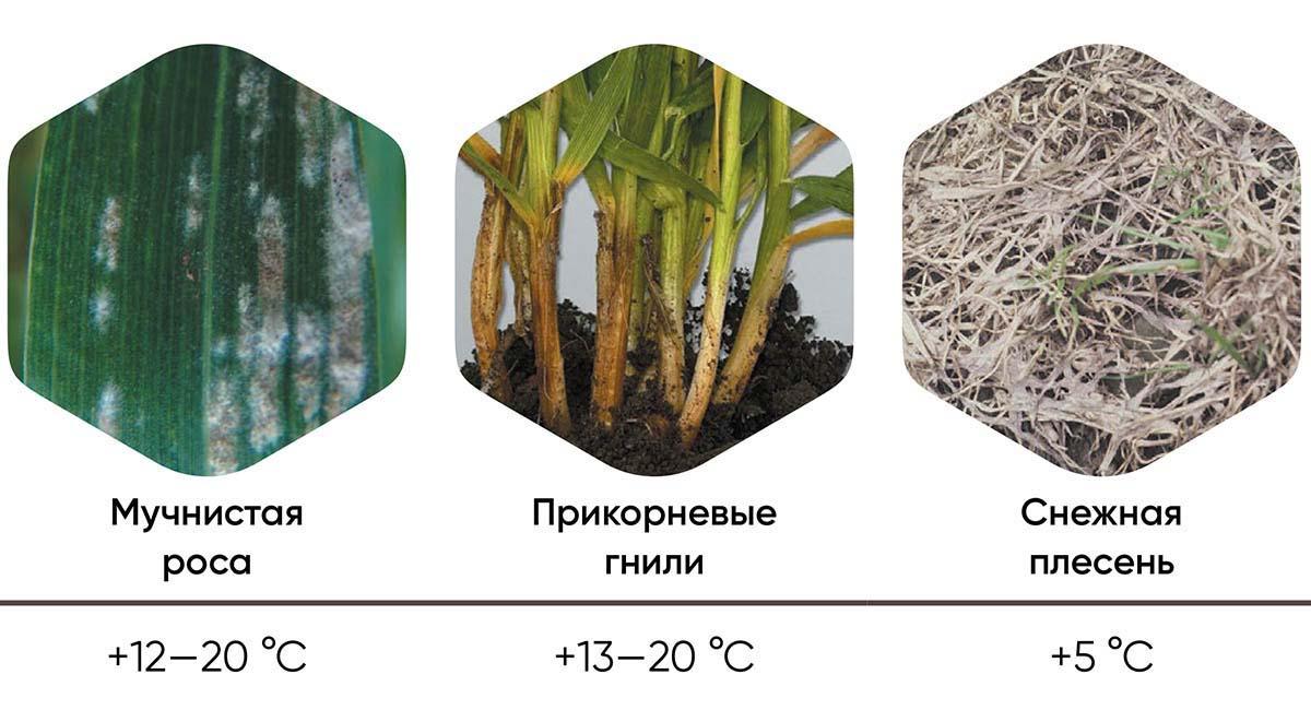Рис. 2 Температурные оптимумы развития ранневесенних заболеваний.