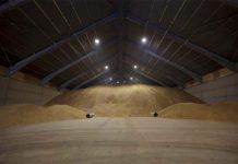 Торги зерном из госфонда завершились безуспешно