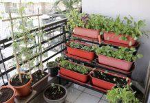 Выращивание зелени на балконе – все тонкости