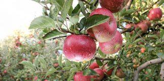 Линейка препаратов «Щёлково Агрохим» пополнилась инсектицидом для защиты садов и виноградников