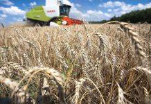 Действия России на мировом рынке зерна пугают потребителей и поднимают цены