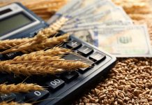 Доходы российских аграриев в новом сезоне могут сократиться