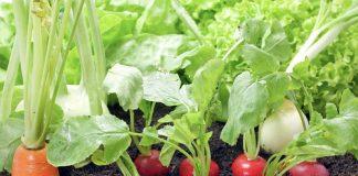 Хорошие соседи по овощной грядке