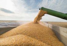 Импортеры из 11 стран мира предъявили претензии к качеству российского зерна