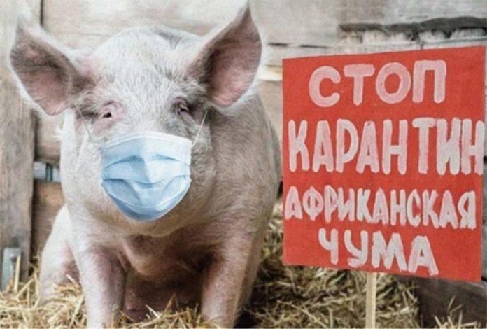 Минсельхоз РФ утвердил новые ветправила по борьбе с АЧС
