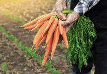 Особенности хранения моркови