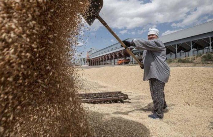 Введение экспортных квот и пошлин на зерновые культуры погубит отечественный рынок зерна
