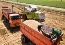 Российские производители зерна перестраиваются на новый лад