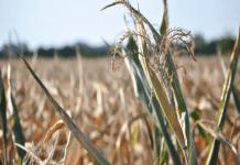 В Крыму снизились урожаи сельхозпродукции