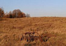 Сельское хозяйство Севастополя находится в полном упадке
