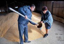 Ростовскую сельхозкомпанию оштрафовали за неправильное хранение семян