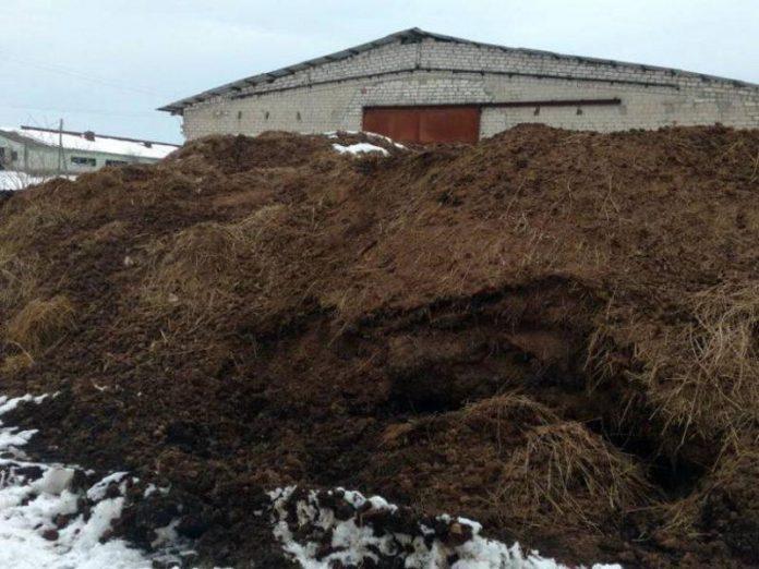 Удмуртского фермера оштрафовали за размещение отходов животноводства на земельном участке