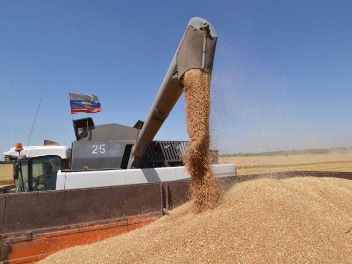 Во что выльются российскому аграрному сектору экспортные ограничения?