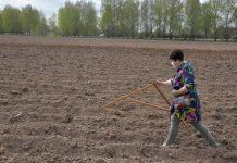 Жителям Костромской области бесплатно раздают землю под огороды