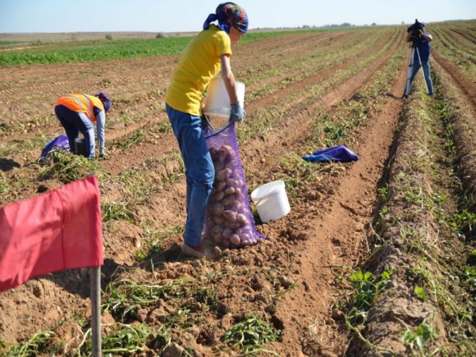 В Астраханской области на 70% может упасть производство сельхозпродукции