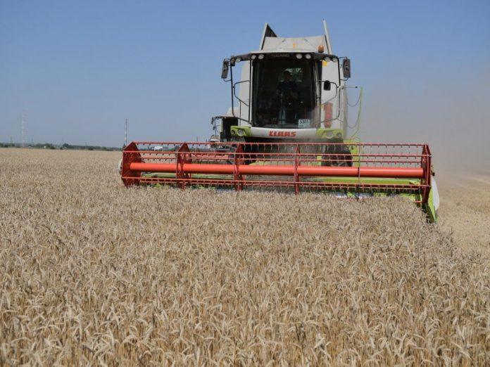 Аграрии Ростовской области будут сокращать посевные площади