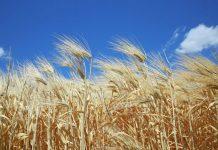 АПК России — оценка текущей ситуации на продовольственном рынке и в главном секторе экономики