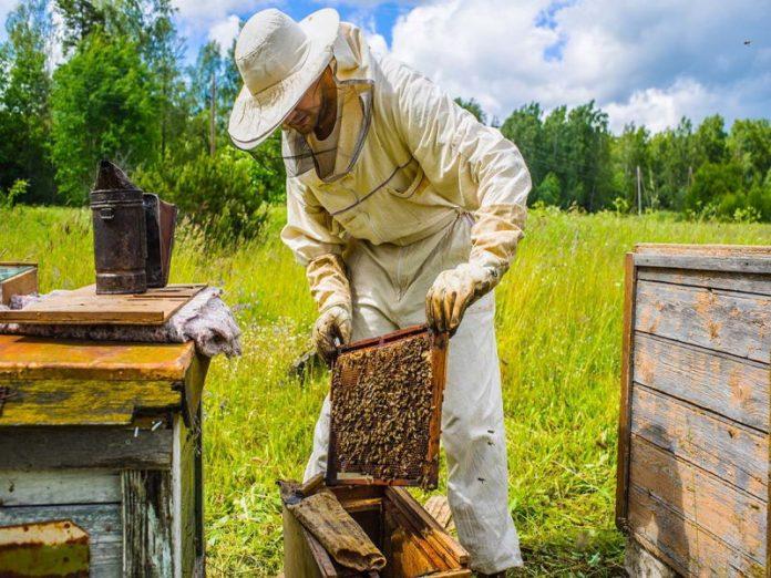 Новый закон о пчеловодстве