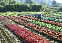 Сокращение использования пестицидов позволит собирать качественный урожай